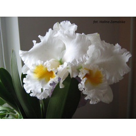 Blc. Eagle Eye 'All...