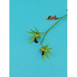 Dendrobium...