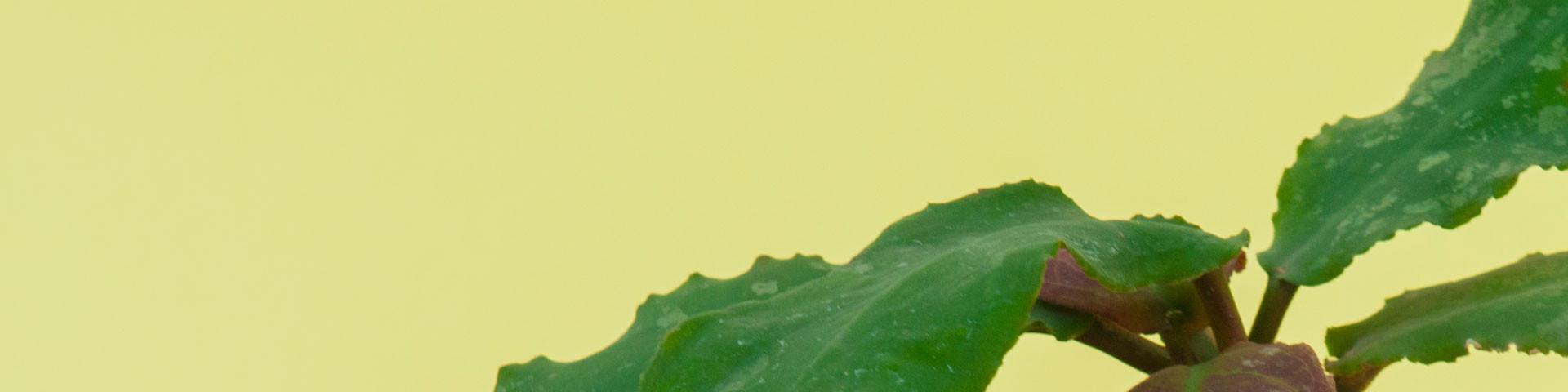 Inne rośliny