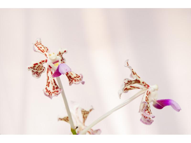 Międzynarodowa Wystawa Orchidei 2019 we Wrocławiu